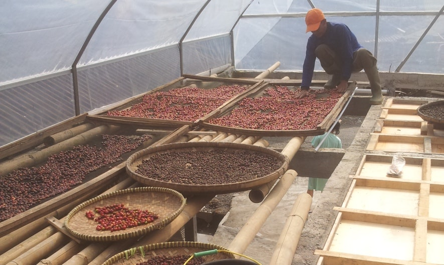 Foto: Proses pasca panen kopi Ratamba Banjarnegara